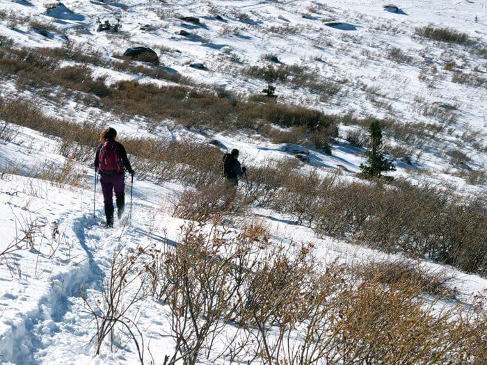 Mokelumne Wilderness snowshoeing