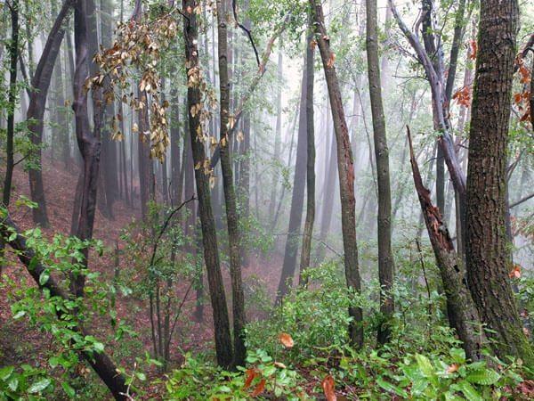 Henry Cowell State Park: Big Ben Loop #winehike