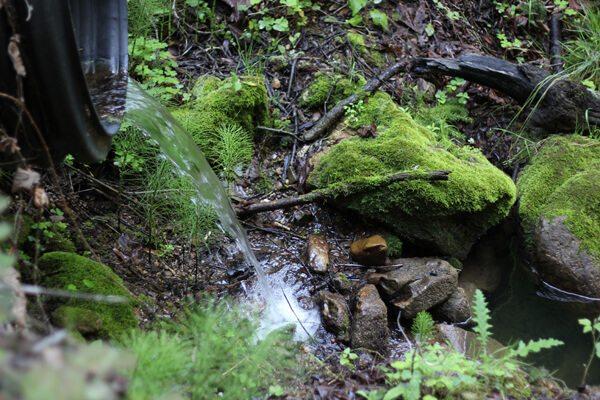 Russian Ridge OSP: Ancient Oaks, Charquin, Borel Hill