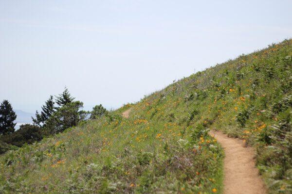 Mt. Tamalpais State Park: Matt Davis-Steep Ravine Loop