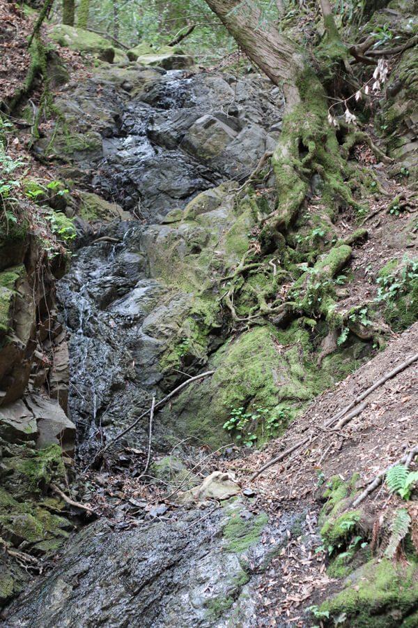 Uvas Canyon County Park: Alec Canyon & Waterfall Loop
