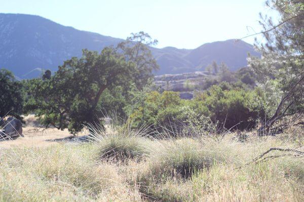 Ventana Wilderness: Junipero Serra Peak