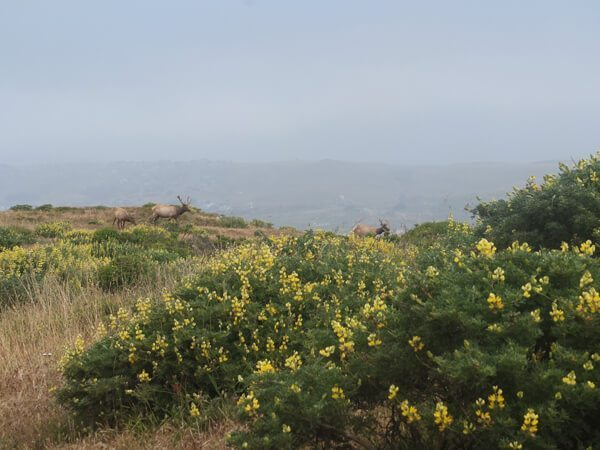 Point Reyes National Seashore: Tomales Point