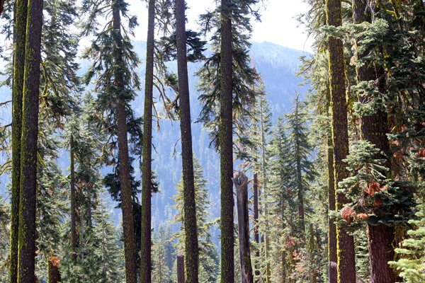 Lassen Volcanic National Park: Mill Creek Falls Hike Review