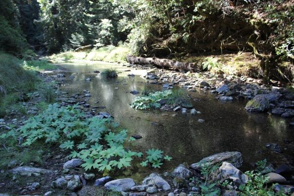 Portola Redwoods State Park: Tiptoe Falls