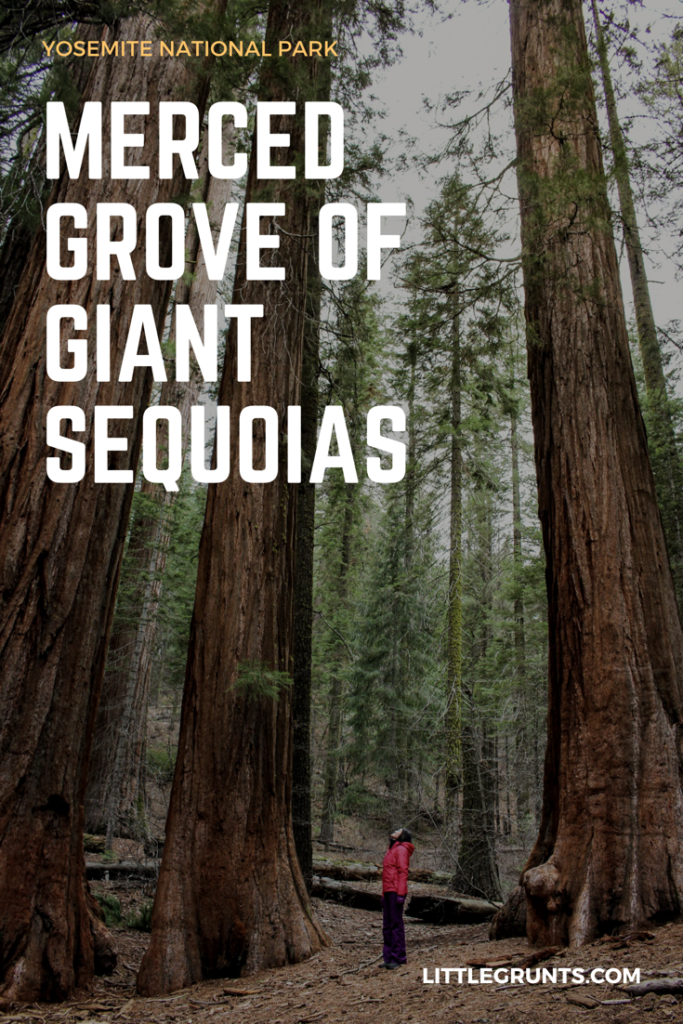 Hiking Merced Grove of Giant Sequoias, Yosemite National Park