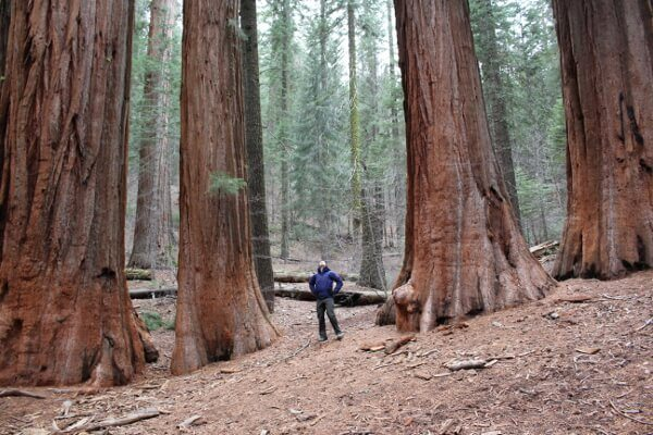 Yosemite National Park: Merced Grove of Giant Sequoias
