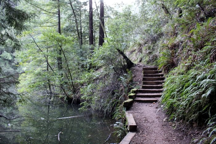 Mt. Tamalpais State Park: Cataract Falls Hike Review