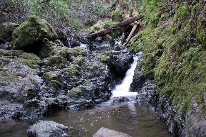 Mt. Tamalpais State Park: Cataract Falls Hike Review