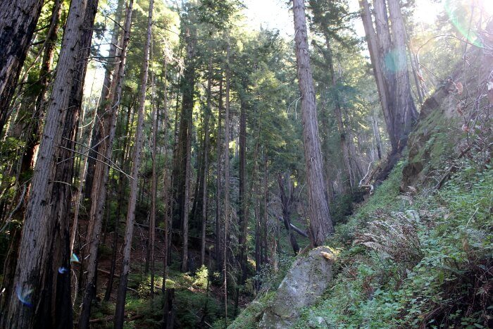 Julia Pfeiffer Burns State Park: Tin House via Tan Bark Trail Trip Report Review