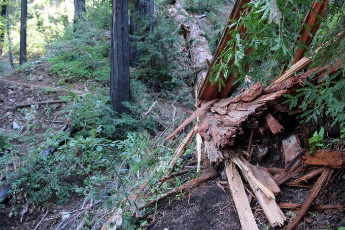 Julia Pfeiffer Burns State Park: Tin House via Tan Bark Trail Trip Report Review
