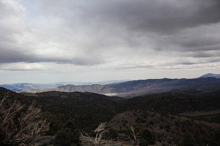 Ancient Bristlecone Pine Forest Sierra View