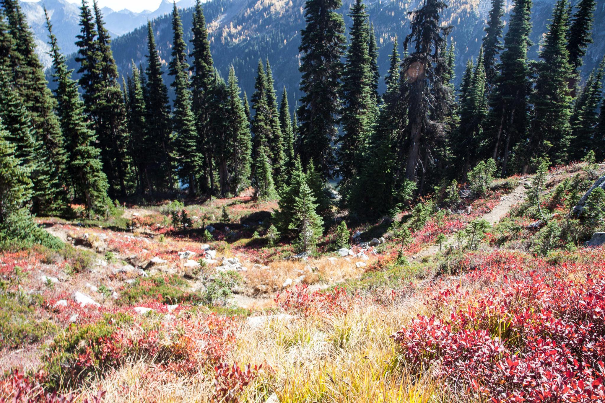 Fall Color At Heather Maple Pass Loop Littlegrunts Com