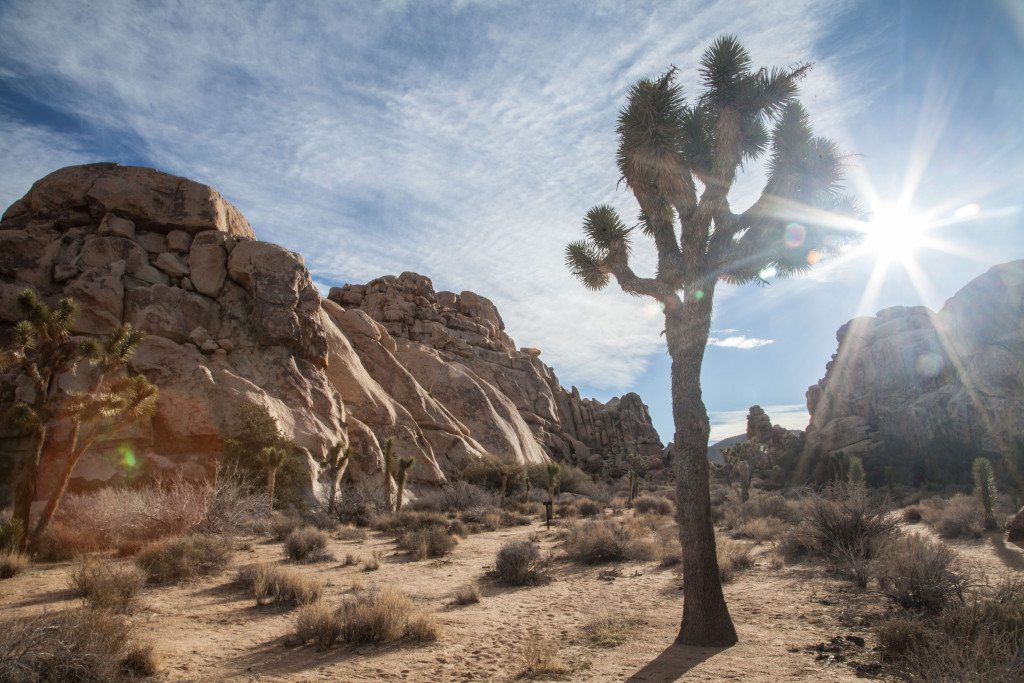 A Weekend in Joshua Tree #rallythetribe