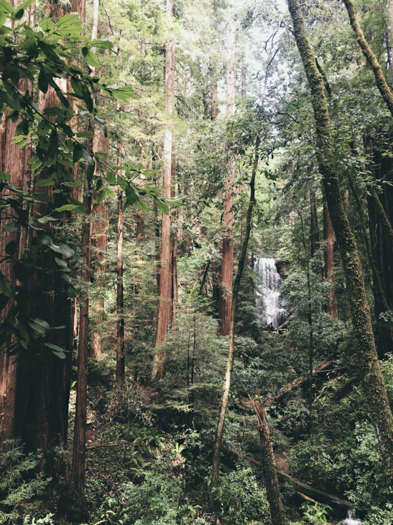 Hiking Berry Creek Falls Big Basin Best Favorite Bay Area Hikes