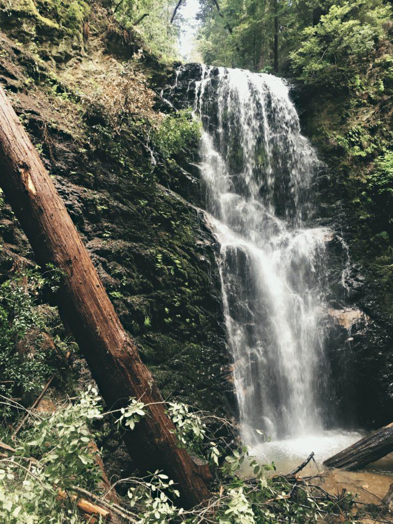 Hiking Berry Creek Falls Big Basin