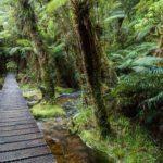 Hiking Lake Matheson Fox Glacier New Zealand