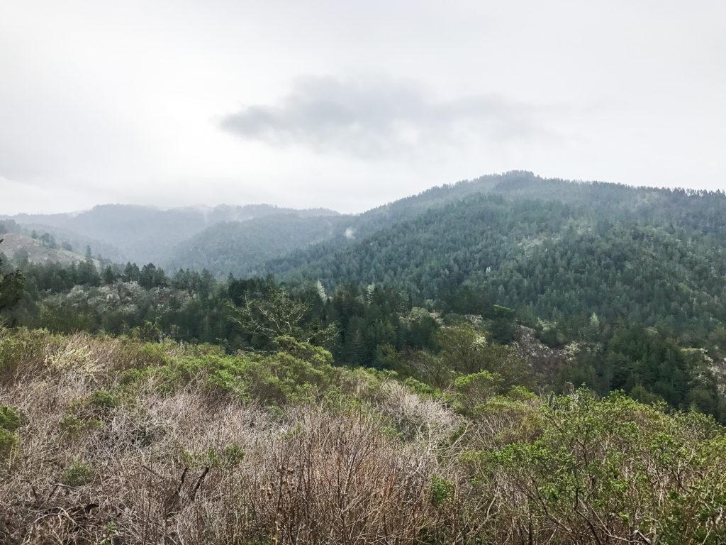 Hiking Purisima Creek Redwoods February 2017