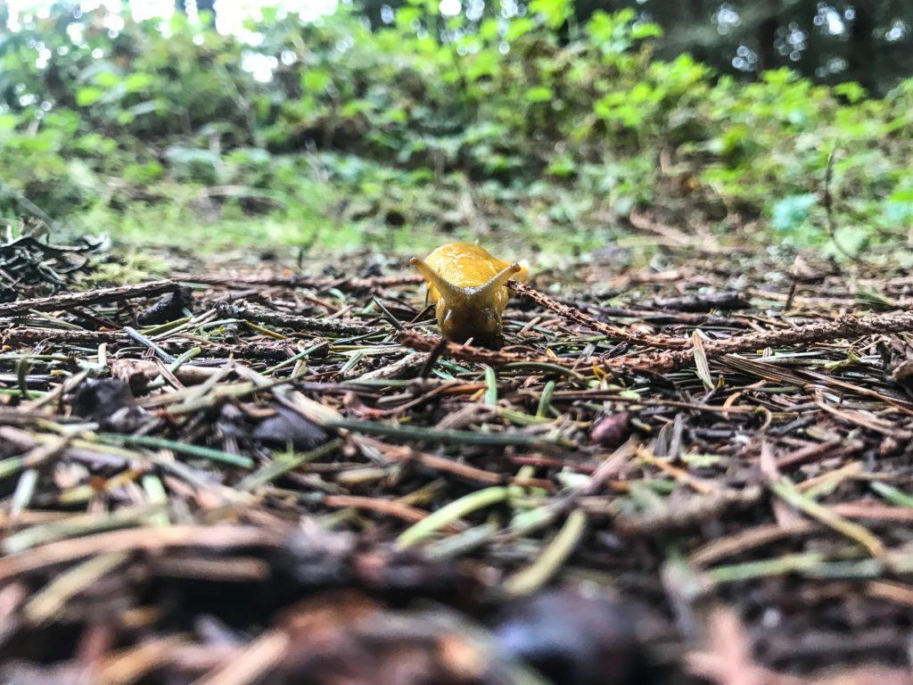 Hiking Purisima Creek Redwoods February 2017 Best Favorite Bay Area Hikes