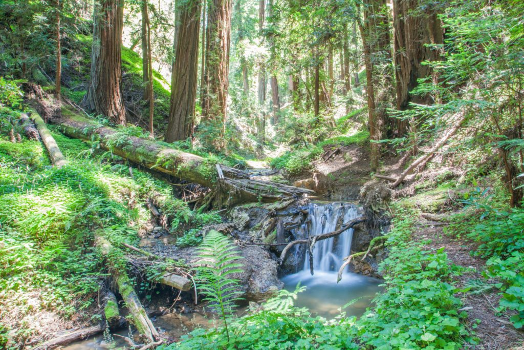Hiking Peters Creek Loop Portola Redwoods May 2017