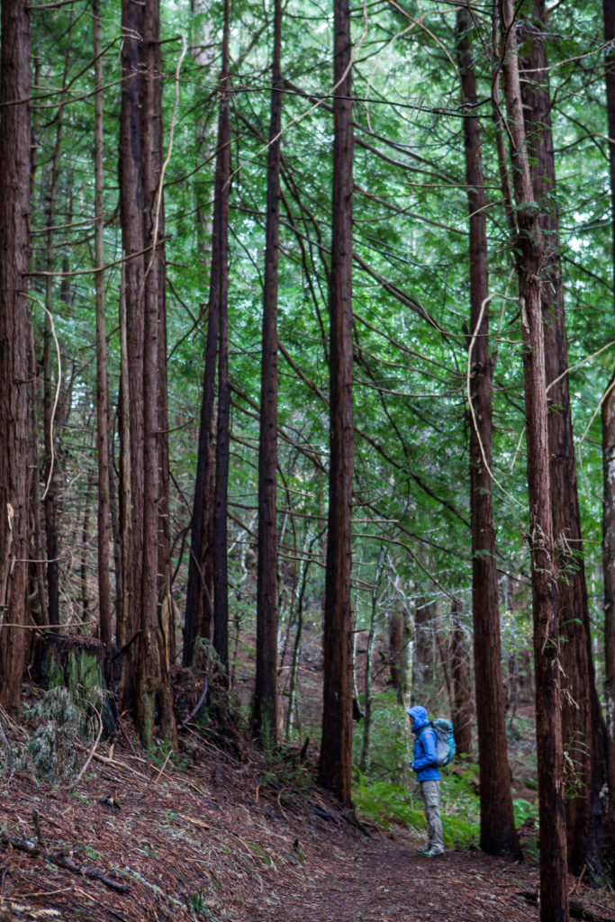 Hiking Heritage Grove, Sam McDonald County Park, Best Favorite Bay Area Hikes