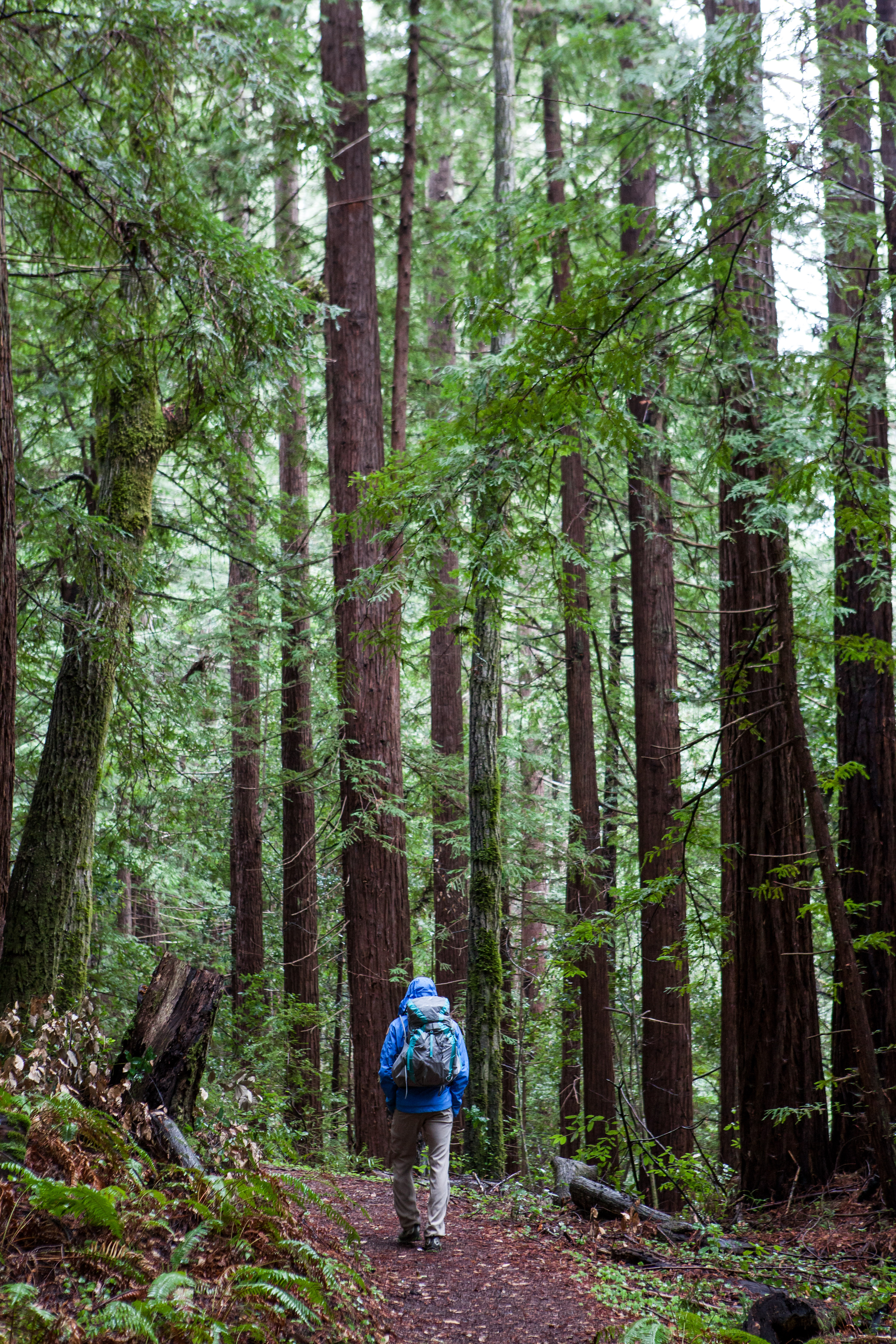 Hiking Heritage Grove, Sam McDonald County Park