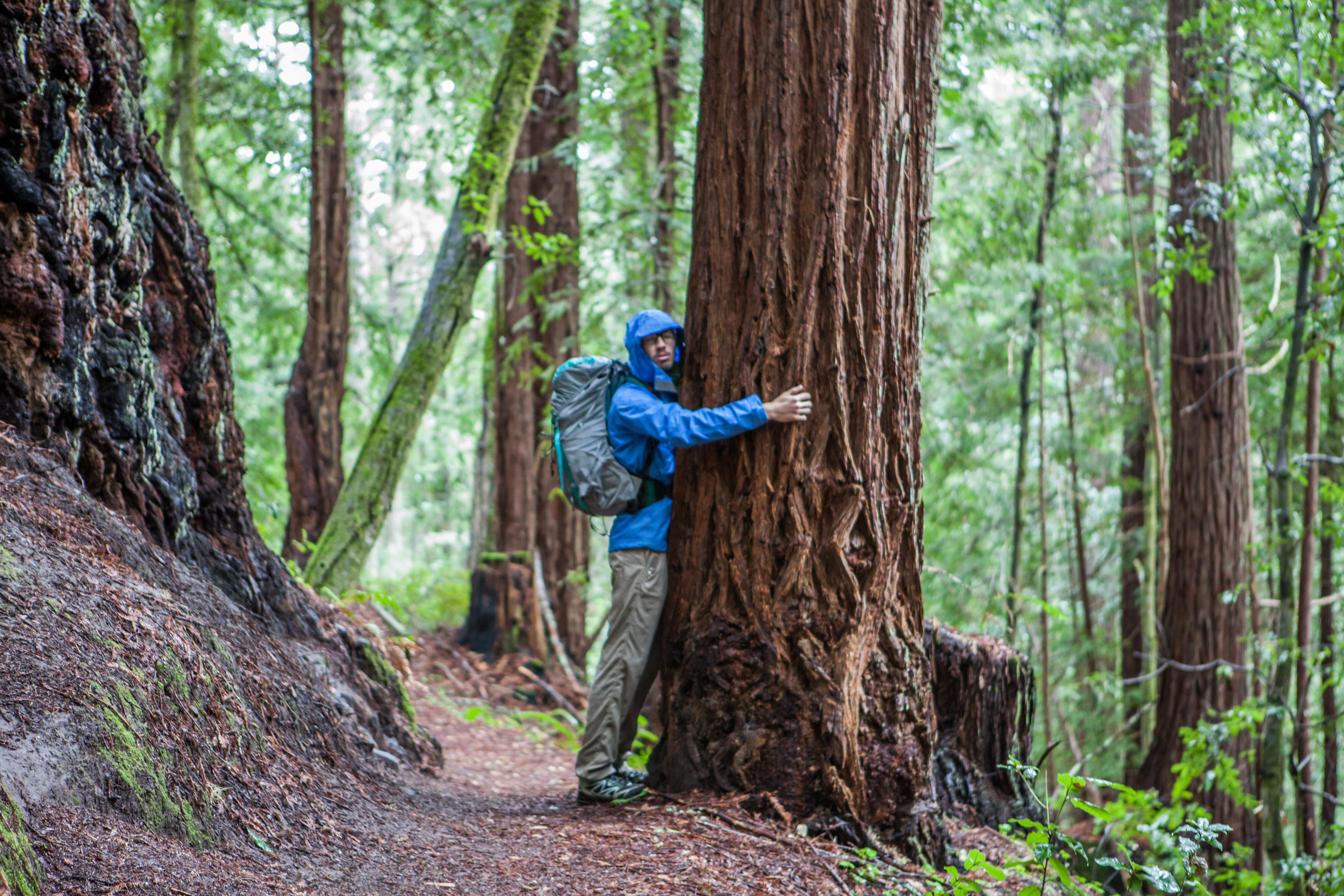 Best Redwood Hikes Bay Area