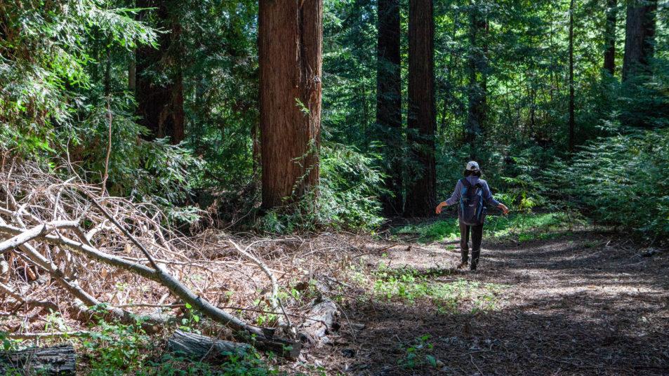 Hiking Bear Creek Redwoods Open Space Preserve