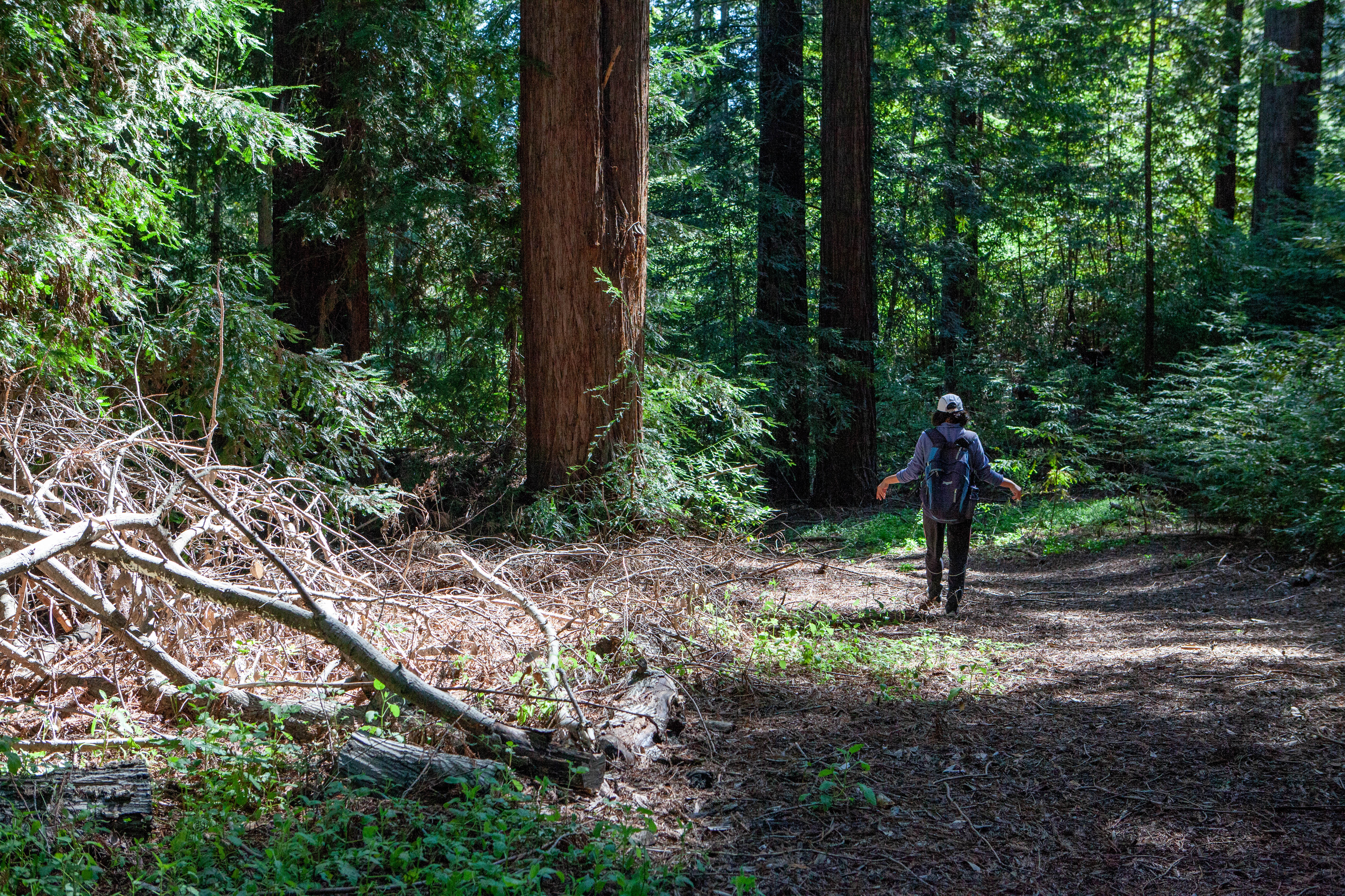 Hiking Bear Creek Redwoods Open Space Preserve