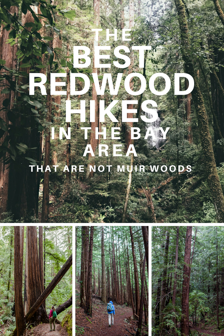 Best Redwood Hikes in the Bay Area