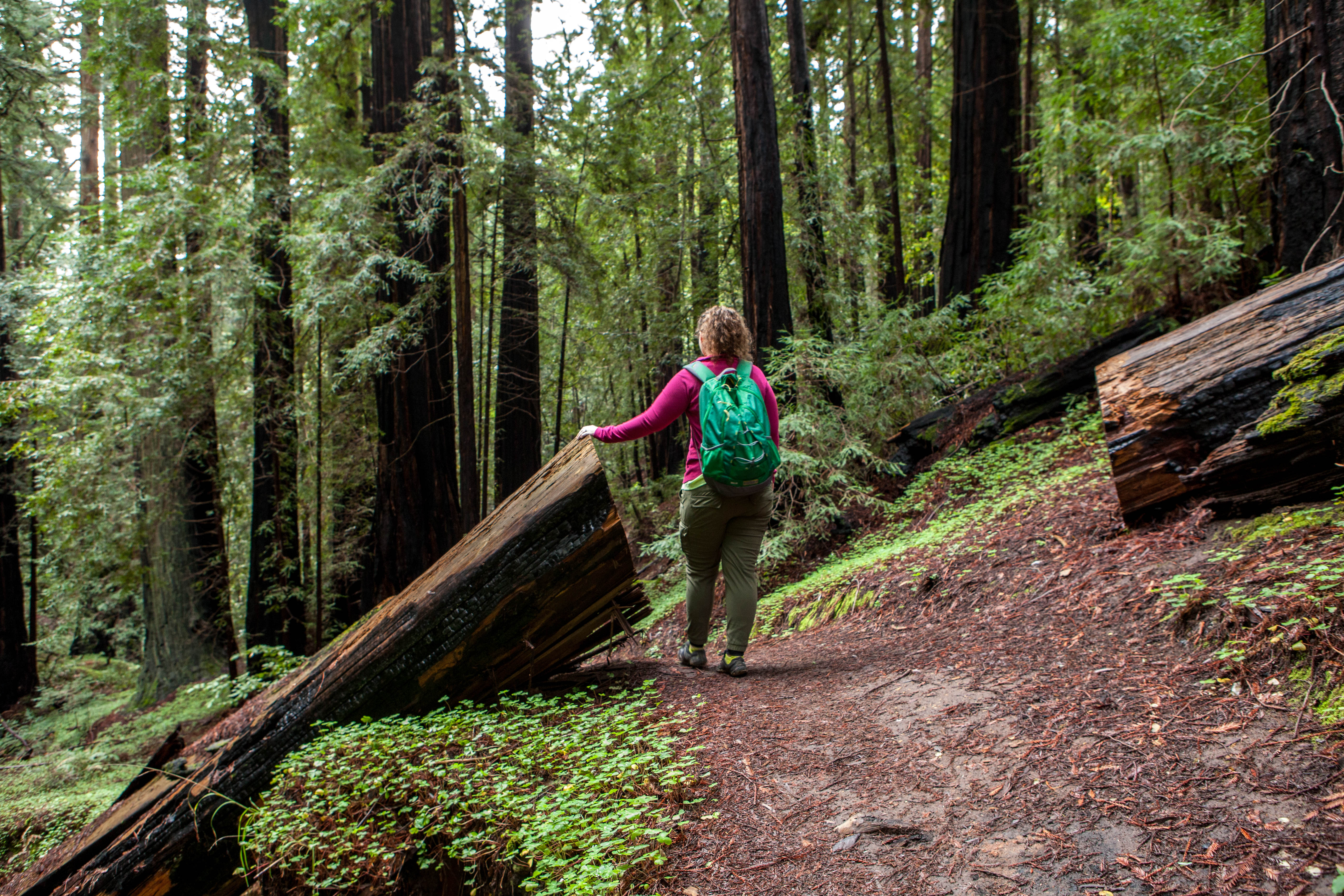 Hiking Meteor Trail, Big Basin Redwoods State Park