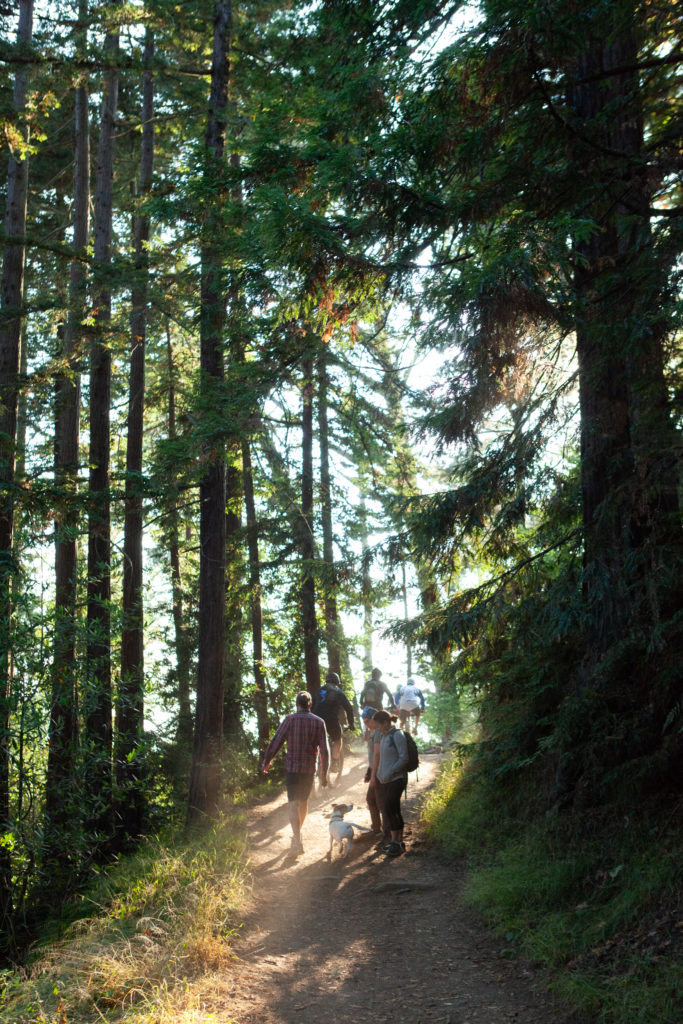 Sequoia Bayview Trail Joaquin Miller Park Best Redwood Hikes Bay Area