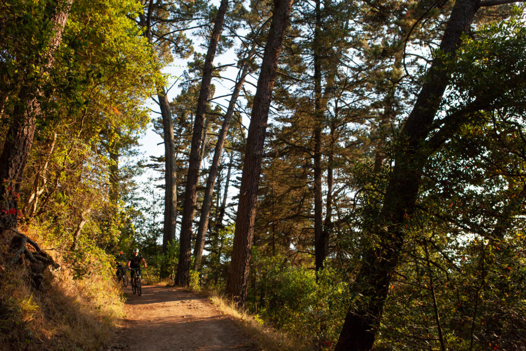 Sequoia Bayview Trail Joaquin Miller Park