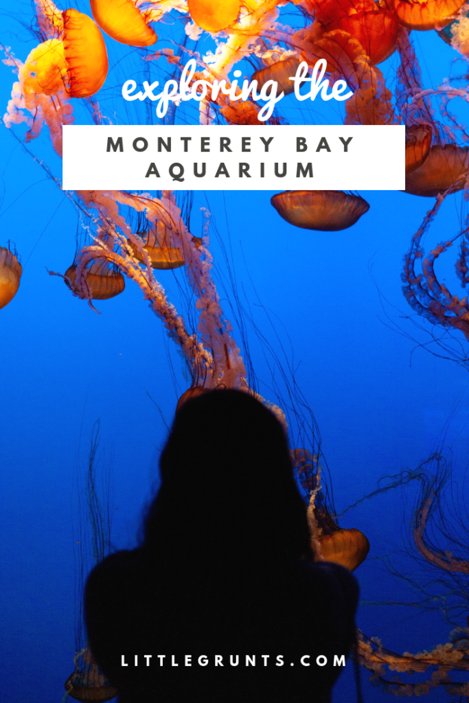 Exploring the Monterey Bay Aquarium