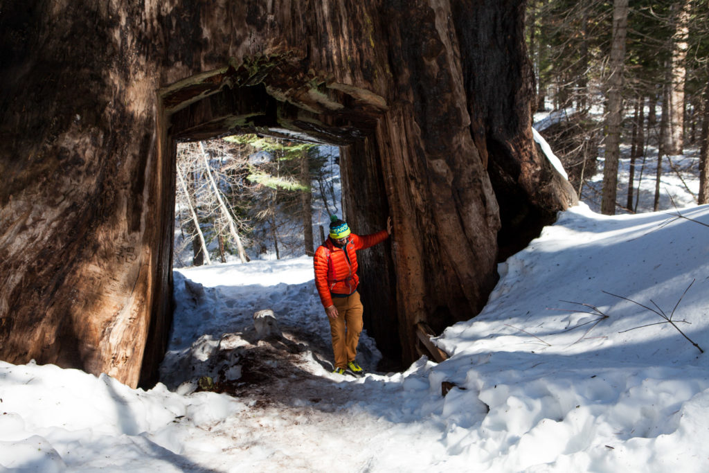 Hiking Tuolumne Grove of Giant Sequoias, Yosemite National Park
