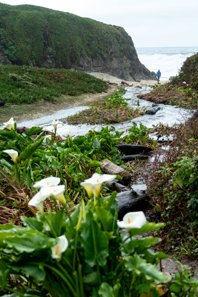 Hiking Calla Lily Valley in Garrapata State Park, Big Sur, CA