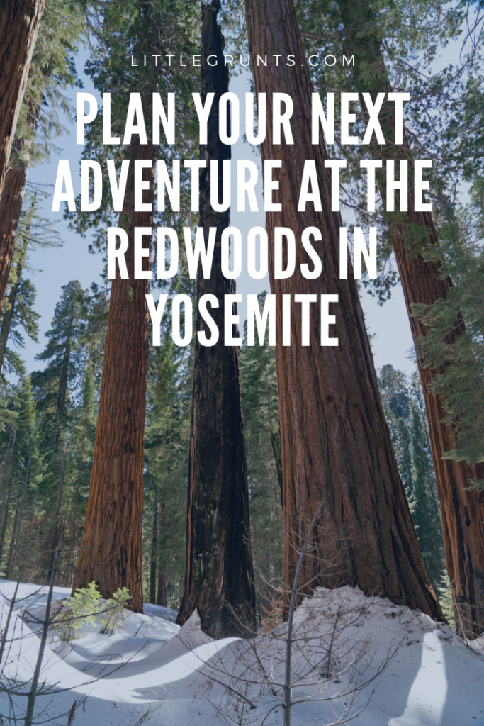Stay at the Redwoods in Yosemite Review